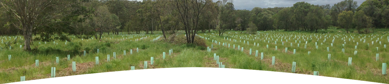 revegetation-header